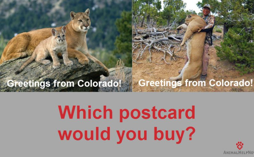 Colorado Government to World: We Kill Mountain Lions and Bears