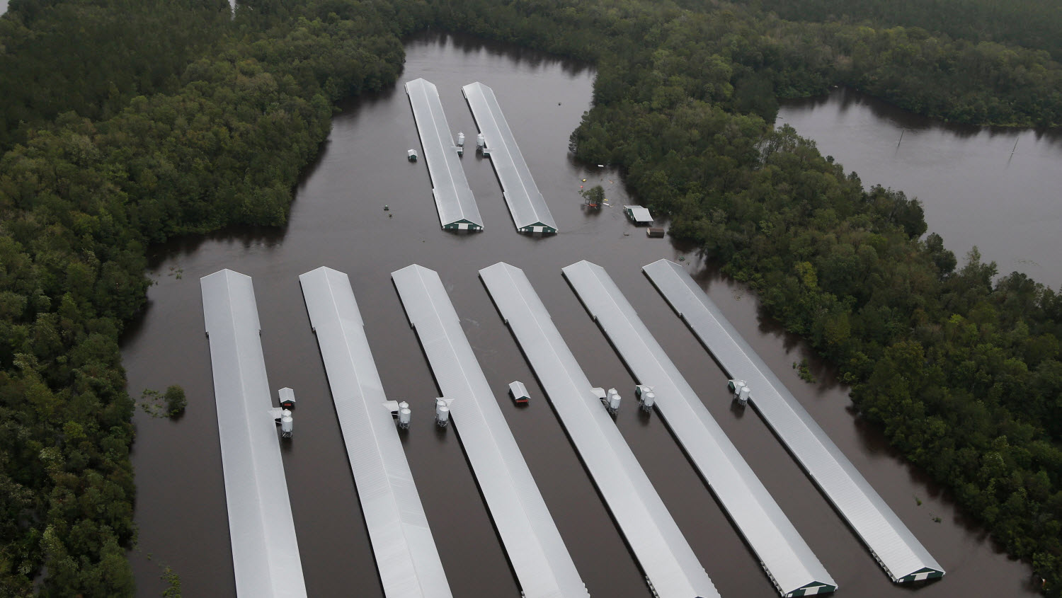 Inundated factory farm.